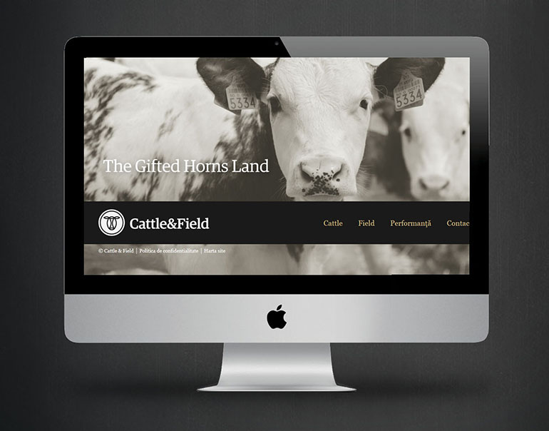 Cattle & Field-6